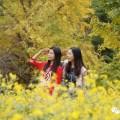 旅拍|晴,微风,偶尔落叶子和落妹纸