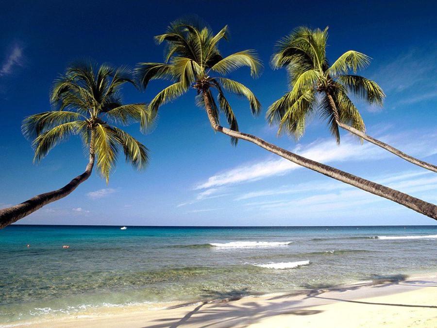 巴巴多斯岛的浪漫蜜月之旅
