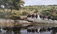 如何拍水面倒影的婚纱照