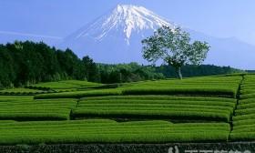 走访6处日本私房婚纱摄影景点!拍出梦幻幸福的瞬间(2)