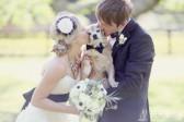带着宠物一起参加婚礼吧!超可爱的毛小孩婚宴照
