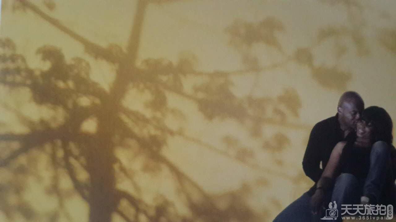 利用墙面上的树影拍摄