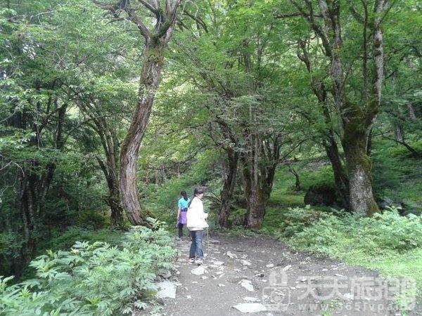 梅里雪山亲子游,畅游香格里拉徒步雨崩【31】