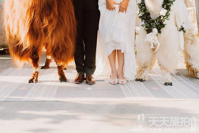 超萌草尼马伴娘出动 整场婚礼就给牠们当主角就好啦【1】