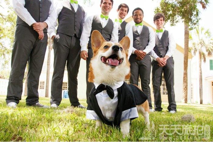 超萌草尼马伴娘出动 整场婚礼就给牠们当主角就好啦【3】