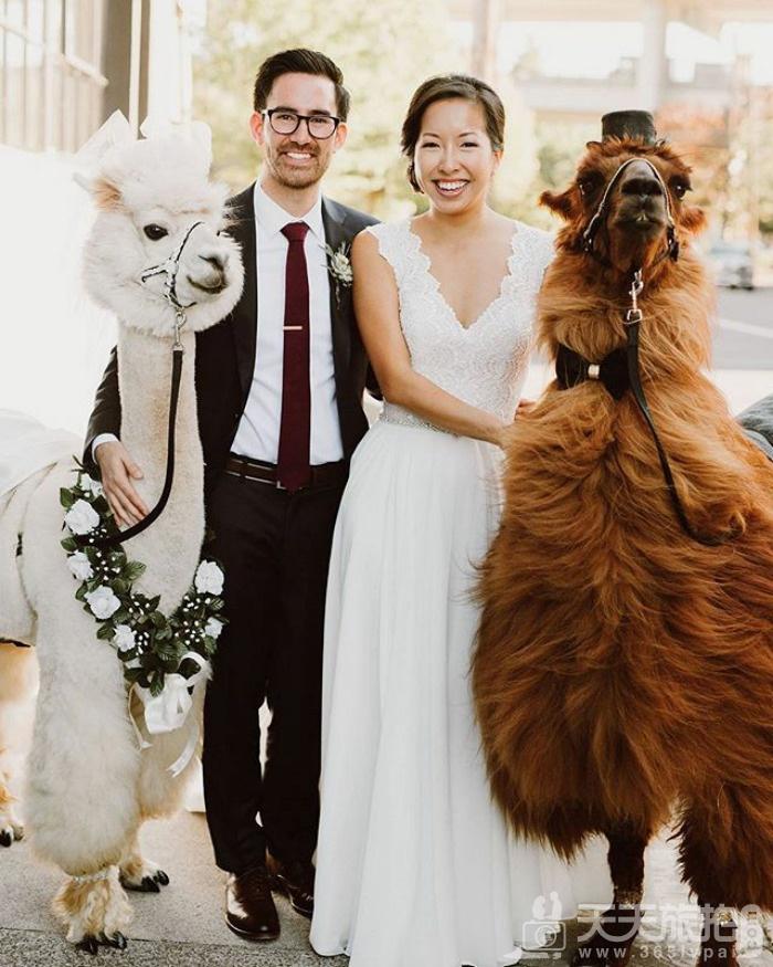 超萌草尼马伴娘出动 整场婚礼就给牠们当主角就好啦【5】