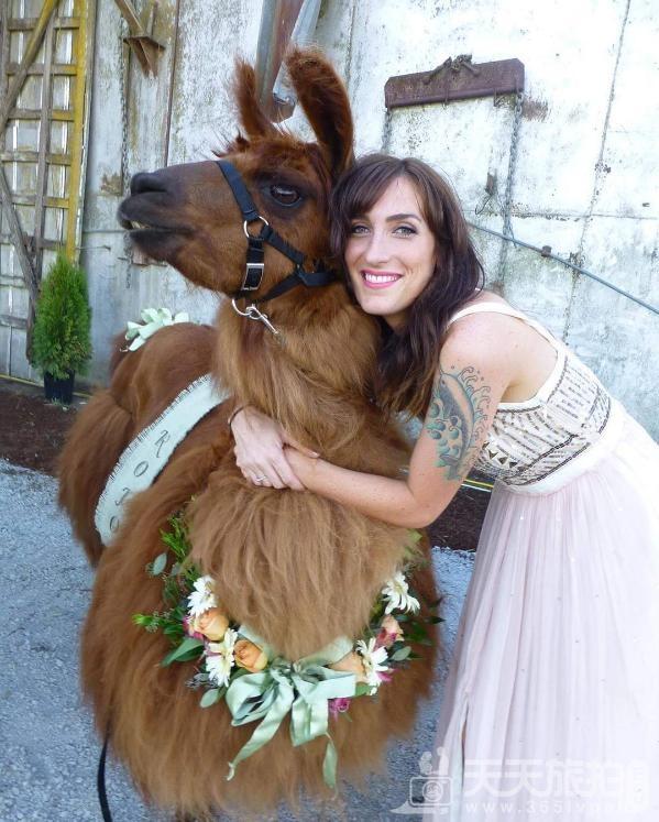 超萌草尼马伴娘出动 整场婚礼就给牠们当主角就好啦【9】