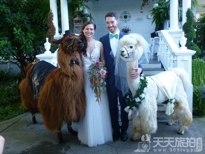 超萌草尼马伴娘出动 整场婚礼就给牠们当主角就好啦【8】