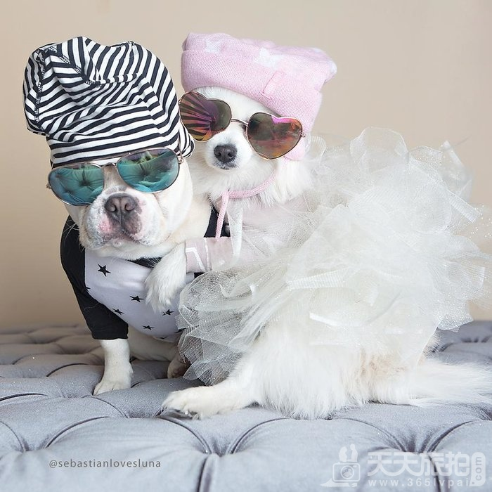 超恩爱狗夫妻拍婚纱 这才是真的让单身狗闪瞎【10】