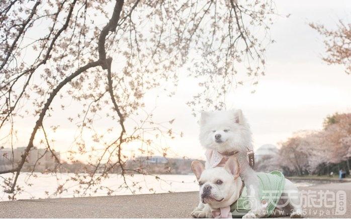 超恩爱狗夫妻拍婚纱 这才是真的让单身狗闪瞎【20】